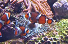 Trio; Adventure Aquarium; Camden, New Jersey, USA.  March 2013.