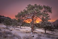 This morning the ponderosa trees were all covered in fresh snow creating a beautiful scene to photograph at sunrise in Rocky Mountain National Park.
