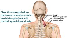 Neck pain can travel down the upper back or shoulders. Release the levator scapulae and your neck muscles effectively with these techniques. Get relief from neck, upper back and shoulder pain instantly Neck And Shoulder Exercises, Back Pain Exercises, Neck Stretches, Shoulder Workout, Stress Exercises, Shoulder Pain Relief, Neck And Shoulder Pain, Muscle Pain Relief, Neck Pain Relief