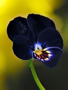 .Lindo color de la violeta