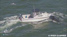 Boat strikes humpback whale in SF bay