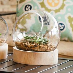 Large Glass Globe Terrarium With Wood Base Gifted Living,http://www.amazon.com/dp/B00GYGCA8Y/ref=cm_sw_r_pi_dp_OOD-sb0DDK342MBR