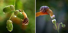 A csigák csodálatos világa