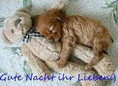ich wünsche euch noch einen schönen abend und später eine gute nacht  - http://www.1pic4u.com/blog/2014/05/18/ich-wuensche-euch-noch-einen-schoenen-abend-und-spaeter-eine-gute-nacht-31/