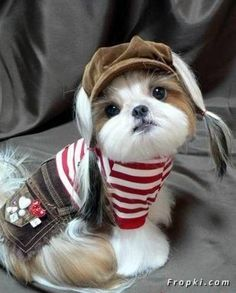 Don't get why people dress their pets, but gotta admit, this is too cute.                                                                                                                                                                                 Más