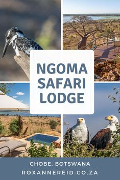 Safari for two at Ngoma Lodge in Chobe National Park, Botswana - Roxanne Reid