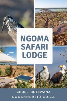 Safari for two at Ngoma Lodge in Chobe National Park, Botswana - Roxanne Reid