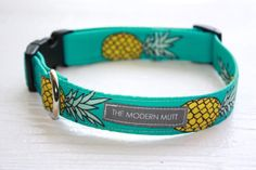 Dog collar The if you like Piña Coladas in teal by TheModernMutt