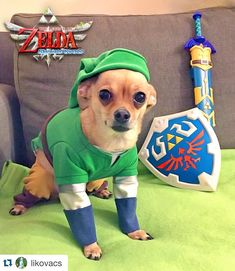 Even doggies love Halloween! #Repost @likovacs with @repostapp.  My little pup Unagi is dressed as Skyward Sword Link and he's ready for battle! Made by me. .  #nintendo #zelda #nintendocosplay #zeldacosplay #chihuahua #chihuahuasofinstagram #halloween #dog #dogcostume #nintendocostume #zeldacostume by nintendo