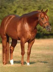 Skeets Peppy.. What a beautiful horse