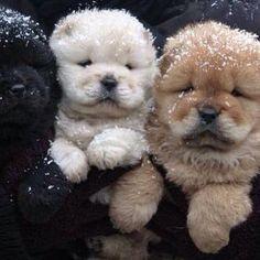 fluffy pups