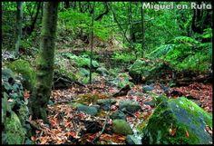 Parque-Nacional-De-Garajonay-La-Gomera  Publicado en el Blog de viajes de Miguel A. Cartagena Salgado #España , #Europa , #Islas , #Canarias , #LaGomera , #naturaleza , #parques , #Unesco