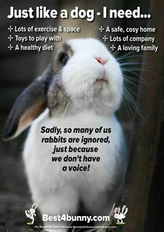 Just like a dog - a rabbit needs. Lots of exercise & space Toys to play with A healthy diet A safe, cosy home Lots of company A loving family It's so sad that so many people fail to know what rabbits need to live a happy life, yet so many will know exac Pet Bunny Rabbits, Pet Rabbit, Baby Bunnies, Dutch Rabbits, Lionhead Bunnies, Lionhead Rabbit, Animals And Pets, Baby Animals, Cute Animals