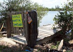 Jones dock on Jungle Trail in Vero Beach, FL. Favorite bike ride along the Indian River Lagoon. Florida Sunshine, Sunshine State, Indian River Lagoon, Ride Along, Outdoor Chairs, Outdoor Decor, Vero Beach, State Of Florida, Beach Town