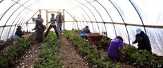 Chicago Mayor Launches New Initiative to Transform Empty Lots into Thriving Urban Farms........ food prices will continue rising over time, while the costs of growing your own food will rise little