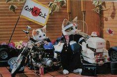 なめ猫/80年代、昭和懐かしヒット&グッズ/ナッツーイ