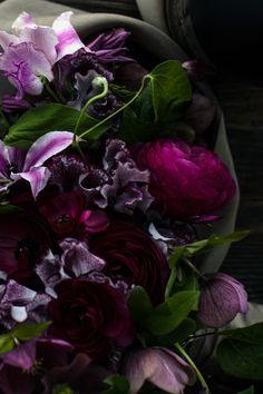 deep purple blooms