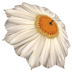 Lovely stickumbrella with printed picture of a white Gerbera. This flower umbrella and its scalloped edge has unbreakable fiberglass ribs and a cover. $46.05 - http://rosemarie-schulz.eu/en/stick-umbrellas/21-stickumbrella-white-gerbera-4250120272016.html