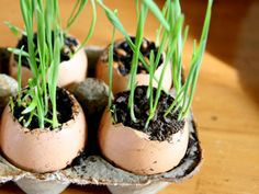 Start seedlings in an egg carton. | 21 Ways To Build A Miniature Garden With Items Found In Your House