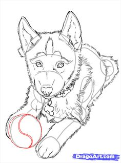 Easy Drawings how to draw huskies, draw a husky step 24 Puppy Drawing Easy, Husky Drawing, Puppy Drawings, Dog Drawing Simple, Cute Husky, A Husky, Husky Gris, Animal Sketches, Drawing Sketches