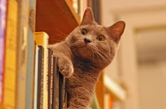 12 Bookstore Cats Who Prove Life Is Better on the Shelf