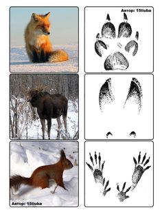 Arctic Animals, Forest Animals, Preschool Art, Preschool Activities, Projects For Kids, Crafts For Kids, Dragon Comic, Animal Footprints, Cicely Mary Barker