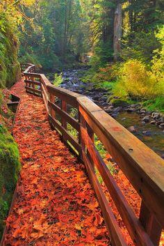 Beautiful fall path. Autumn alongside a creek