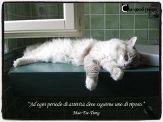 """""""Ad ogni periodo di attività, deve seguirne uno di riposo"""" #gatti #dormire #cat"""