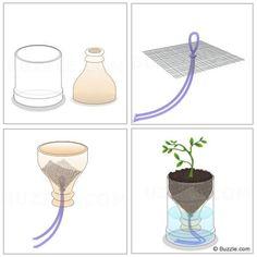Grow herbs with wine bottles