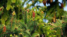 6 jótékony hatású fa, melyekről érdemes többet tudni   Sokszínű vidék Small Artificial Plants, Artificial Plant Wall, Artificial Flowers, Water Garden, Garden Plants, Indoor Plants Low Light, Plants Indoor, Outdoor Plants, Comment Planter