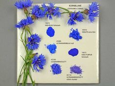 Cornflower and Pigments - Kremer Pigmente GmbH Co. (pictures were taken by Monika Titelius in Derwent Pencils, Textile Dyeing, Painted Boxes, Fabric Manipulation, Color Stories, Color Theory, Art Tutorials, Blue Flowers, Color Inspiration