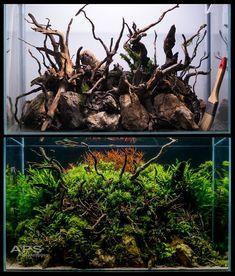 Planted Aquarium, Aquarium Fish, Mini Cactus Garden, Aquarium Landscape, Nano Tank, Aquarium Design, Saltwater Tank, Vivarium, Aquascaping