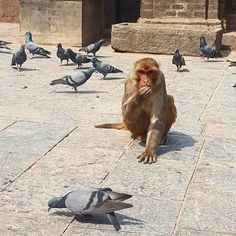 Do you trust Monkeys? I always think they are going to steal my popcorn  I should probably eat less popcorn around them #notinsane #dh