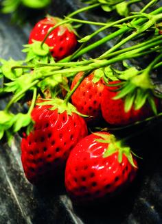 Strawberries #postcards