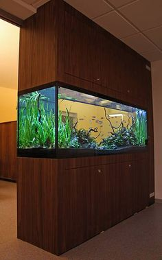 a partition tank lets you see it from 3 sides