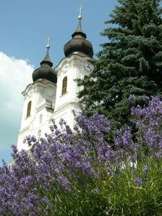 Lavender from Hungary Travelogue, See Picture, Hungary, Provence, Taj Mahal, Travel Destinations, Places To Go, Colours, Lights