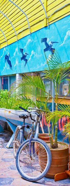 San Pedro Town, Ambergris Caye, Belize, Central America by AJ Baxter Great Places, Beautiful Places, Ambergris Caye, Belize Travel, Caribbean Sea, Color Of Life, Island Life, Beautiful Islands, Central America