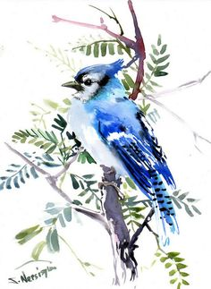 Blue Jay Original watercolor painting 12 X 9 in by ORIGINALONLY, $42.00