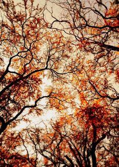 Fall Trees #colors #orange #fall #trees #black #leaves #beautiful #decadent #magical #autumn