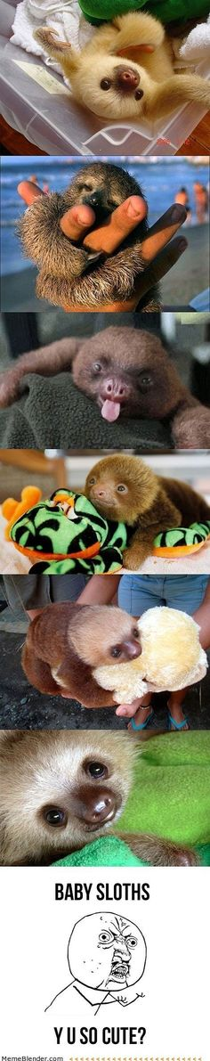Funny pictures about Baby sloths. Oh, and cool pics about Baby sloths. Also, Baby sloths photos. Cute Creatures, Beautiful Creatures, Animals Beautiful, Cute Baby Animals, Animals And Pets, Funny Animals, Wild Animals, Baby Sloth, Cute Sloth
