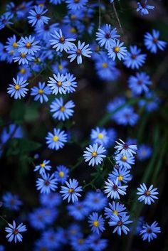 Super Ideas For Flowers Photography Blue Spring Whats Wallpaper, Nature Wallpaper, Flower Aesthetic, Blue Aesthetic, Blue Flowers, Wild Flowers, Bouquet Flowers, Art Flowers, Spring Flowers
