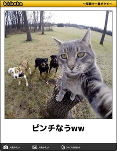 Cat selfie photo featuring a dexterous grey tabby goes viral Animals And Pets, Baby Animals, Funny Animals, Cute Animals, Sleepy Animals, Animals Amazing, Selfie Gato, Funny Selfie, Taking Cat