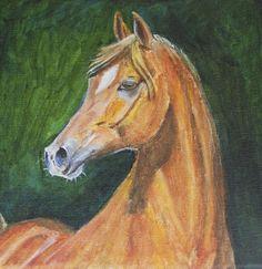 Arabier een mooi en sierlijk paardje
