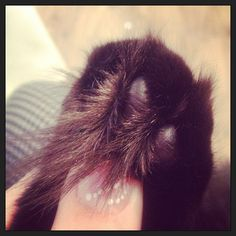 My little pussy cats tufty toes lol