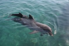 Not-So-Friendly Skies: United Airlines Continues To Transport Dolphins To Marine Parks Dolphin Reef, Dolphin Facts, Dolphin Tours, Bottlenose Dolphin, United Airlines, Eilat, Deep Sea, Under The Sea, Dolphins