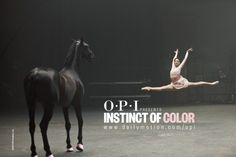 opi lady in black horse - Google Search