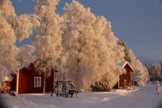 The winter and red houses by irio. Red Houses, Winter Day, Cold, Landscape, Outdoor, Beautiful, Outdoors, Outdoor Games, Landscaping