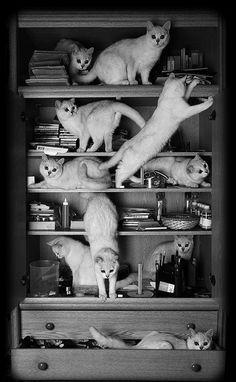 gatoscastoresepatos: The Perfect Shelf.