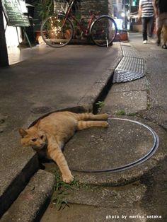 Gato descansa plácidamente. (Tablero: Gatos graciosos) @Pinterest