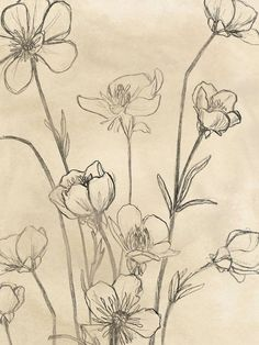 Flower Sketches, Art Drawings Sketches, Easy Drawings, Wildflower Drawing, Art Sketchbook, Square Sketchbook, Wall Drawing, Vintage Drawing, Aesthetic Drawing